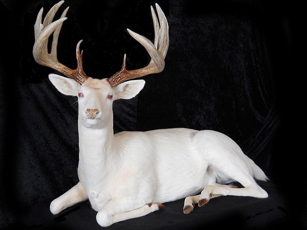 Ghost-Buck-01